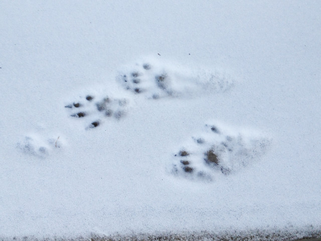 """Finding the Beauty #16 """"Paws Prints"""""""